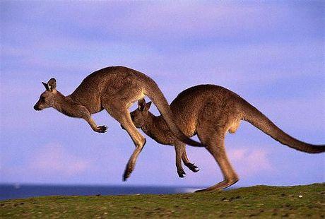 Австралия материк который омывается
