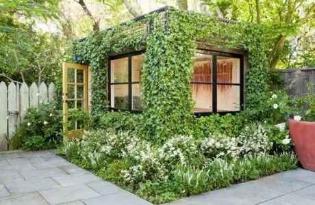 Вьющиеся садовые растения плющ